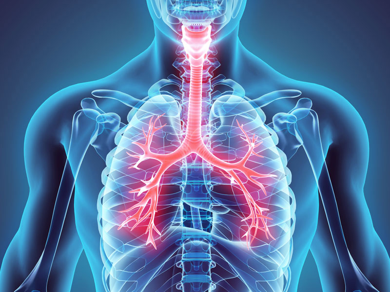 sci-lungs-respiratory-syste